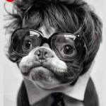 dogs-in-glasses-4