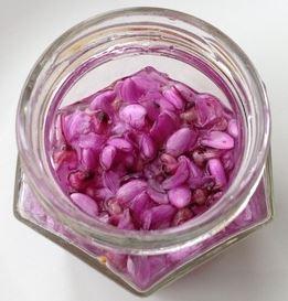 pickled-redbud