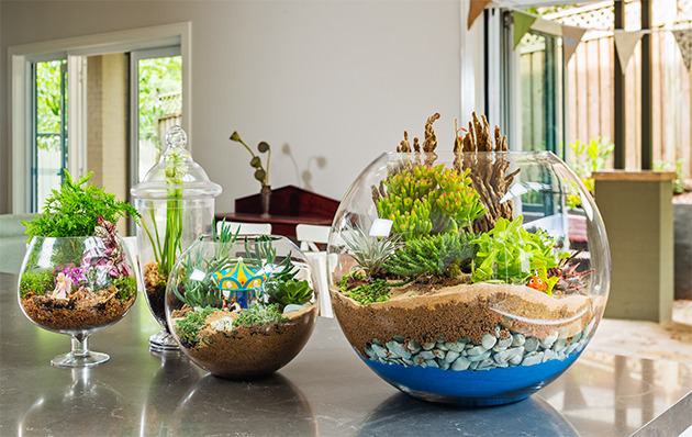 how_to_make_a_terrarium_630_1a5jblo-1a5jbma